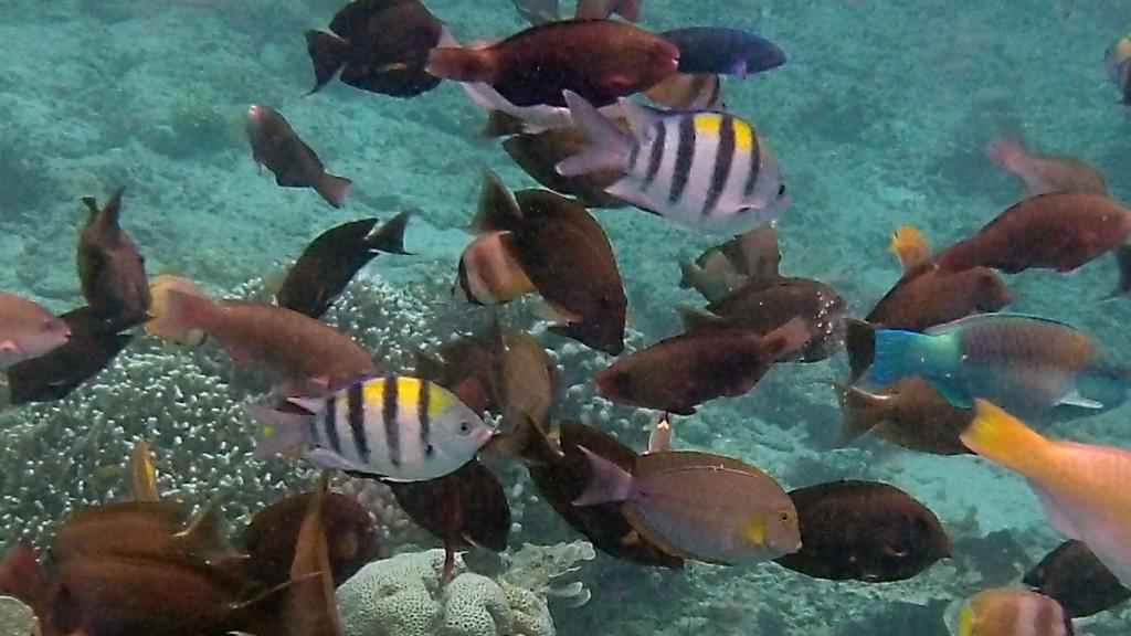 Snorkling Palau Menjangan