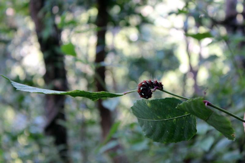 Jungle chenille