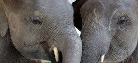 Thai elephant conservation center