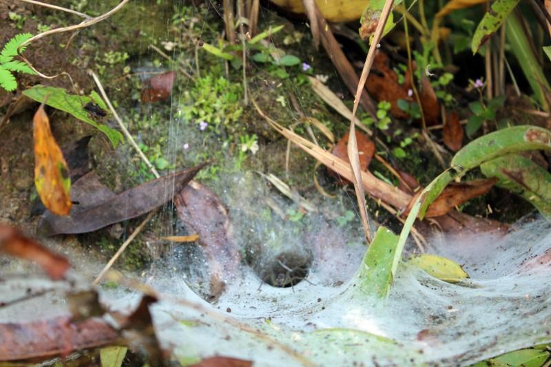 Trek toile d'araignée