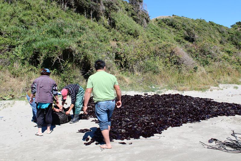 Visiter l'Ile de Chiloé