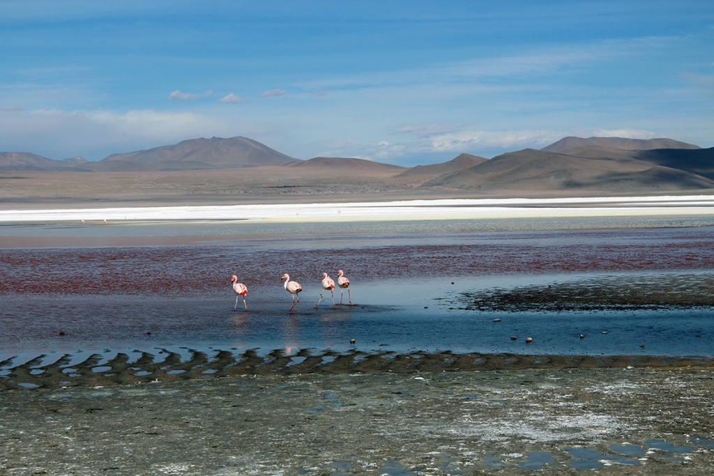 Lagune colorée et flamants roses