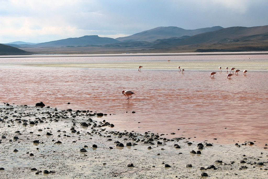 Lagune colorée flamants roses