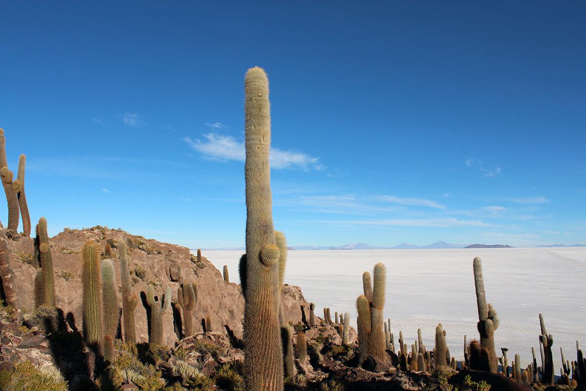 Ile Inca Wasi