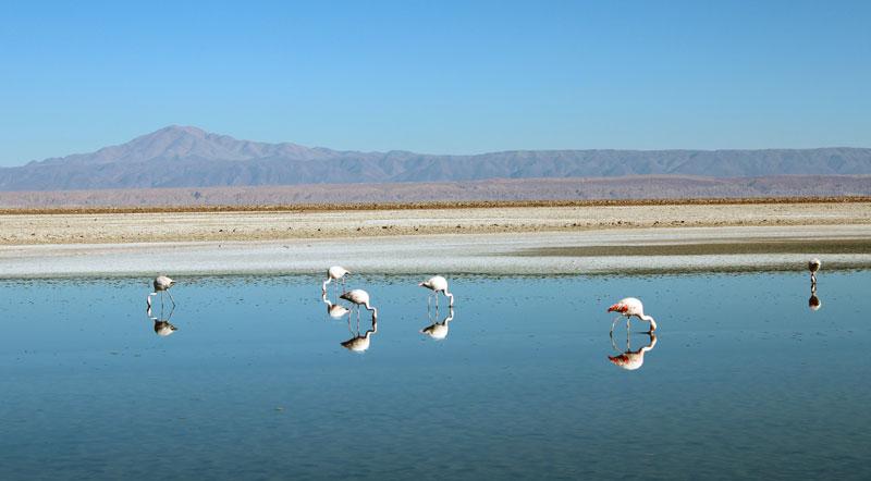 lagunes altiplaniques du nord du Chili, laguna Chaxa