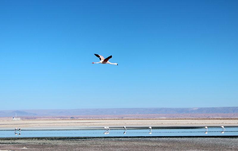 lagunes altiplaniques du nord du Chili