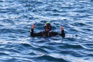 Nager avec les dauphins Kaikoura