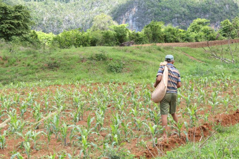 Travail agricole dans les champs