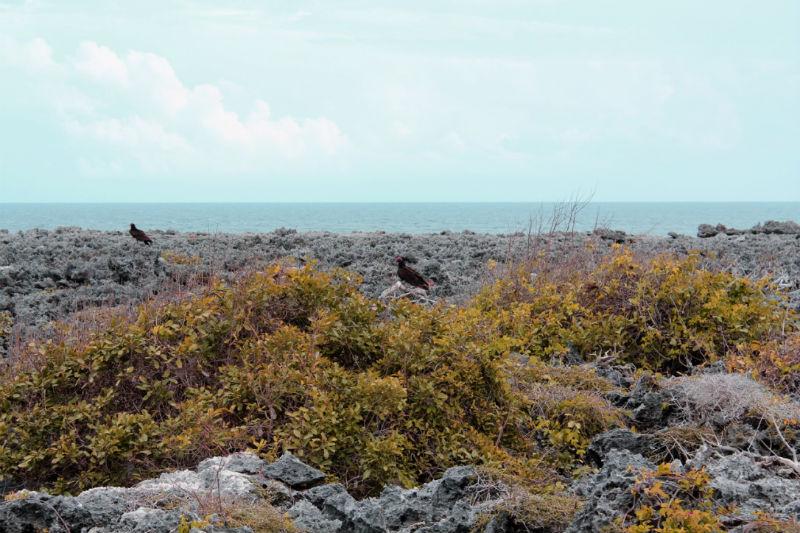 Péninsule de Guanahacabibes