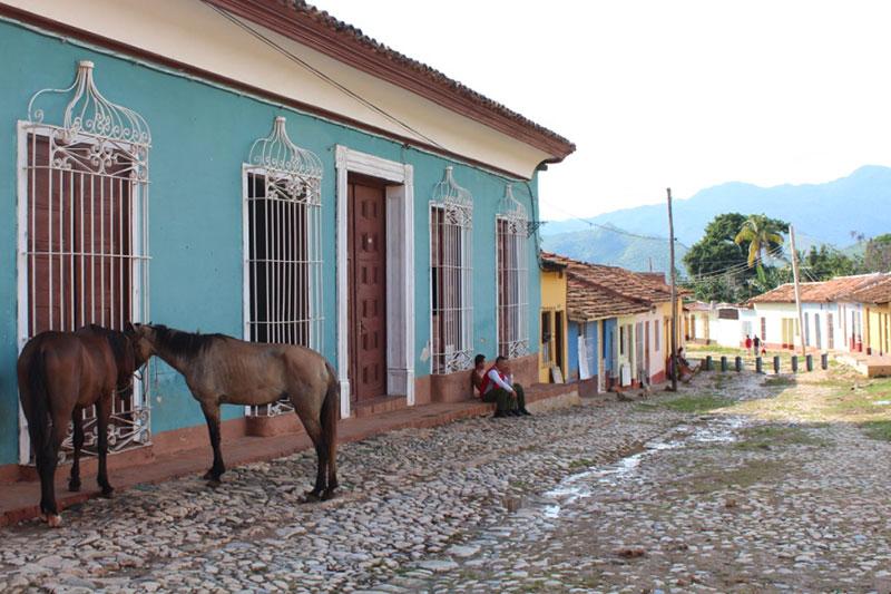 Trinidad chevaux attachés