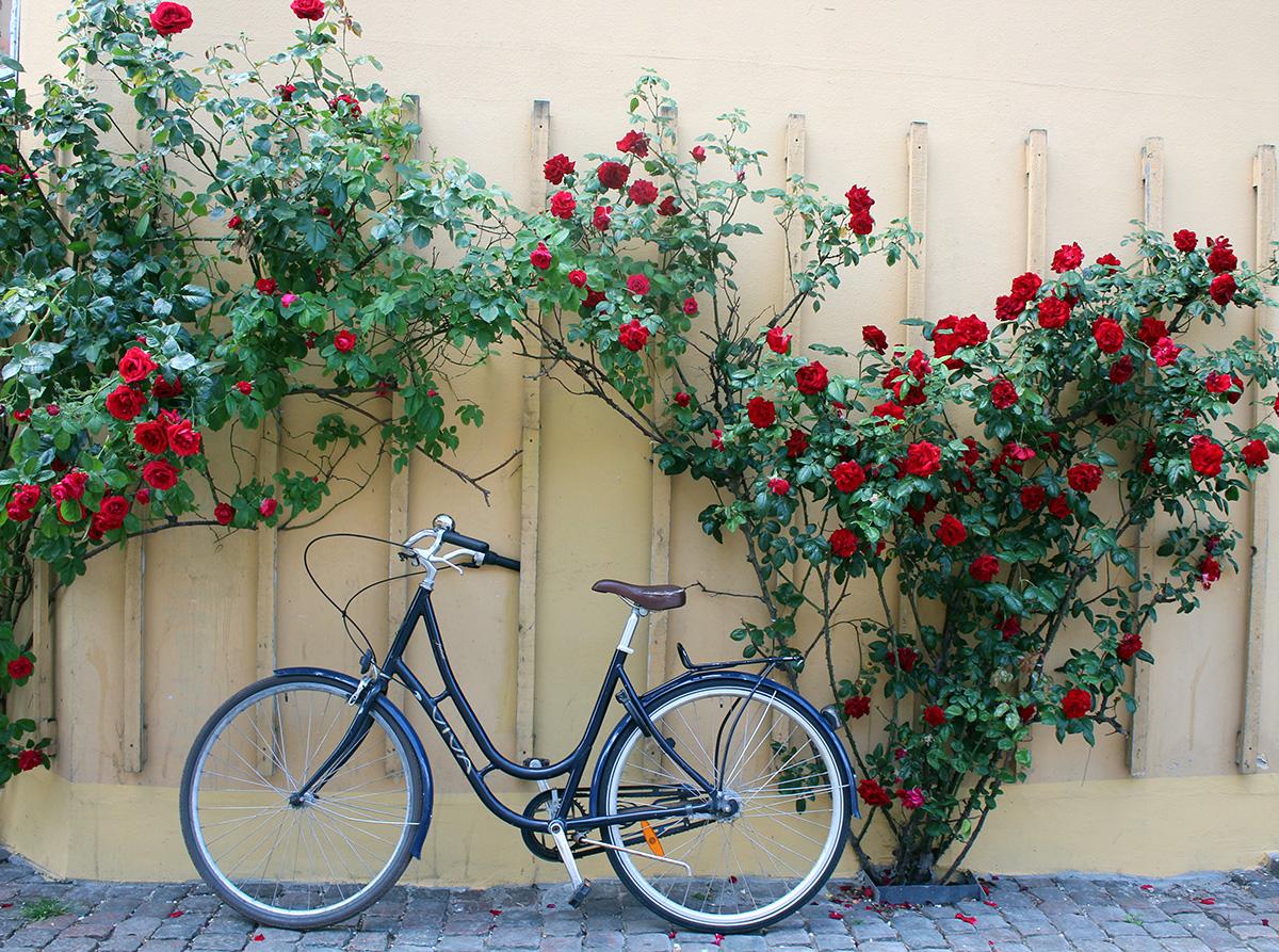 Copenhague vélo