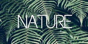 image nature tag sidebar