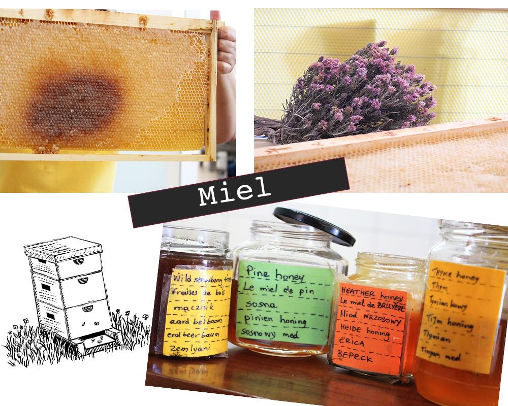 Grèce Kos apiculture miel